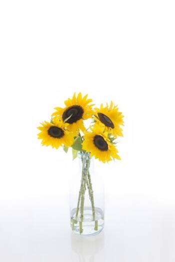 もちろん切り花でも、夏を運んできます。お部屋にあるだけでぱっと華やぎますね。ほかにも朝顔やプルメリアなど、夏を感じる花をインテリアに取り入れてみましょう。