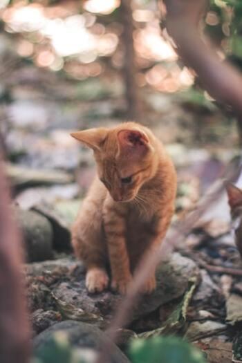 ミュージカル界の不朽の名作「キャッツ」。2020年1月に映画が公開さればかりですが、キャッツの原作が「キャッツ~ポッサムおじさんの猫とつき合う法~」という詩集。作者はイギリスの詩人、トーマス・スターンズ・エリオットで、猫への愛しさが詰まった本です。