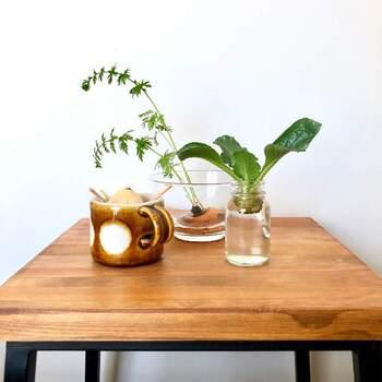 水を感じられるよう、涼し気なガラスの容器を使うのがおすすめ。栽培キットでありながらグリーンインテリアにもなり、元気に葉を伸ばす姿を見ているだけでも嬉しくなりますね。ハーブやミント、バジルなどが水耕栽培に向いていますよ。