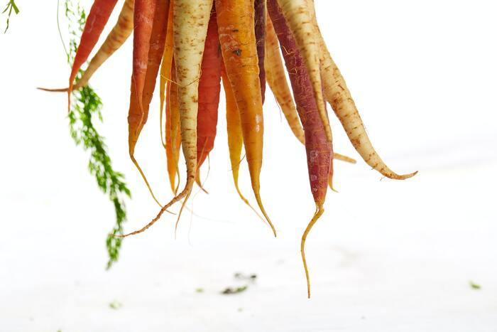 日々の食事できれいを作ろう。美容力がUPする栄養レシピ【爪編】