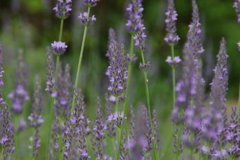 植物オイルやオーガニックハーブから抽出した侵出油を使用したり、お肌にとても優しく、乾燥に敏感なお肌でも使いやすいのが特徴でもあり、魅力でもあります。