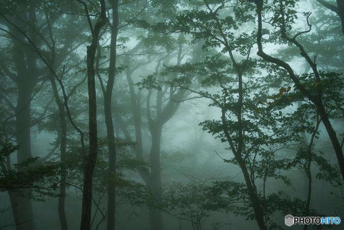 豊かな自然が広がっている大台ケ原では、鬱蒼とした原生林が生い茂っています。大台ケ原では、ハイキングを楽しみながら、森林浴をすることができます。