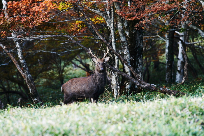 大台ケ原は野生動物や野鳥の宝庫でもあります。ハイキングや散策を楽しんでいると、シカなどの野生動物に巡り会うことができるかもしれませんね。