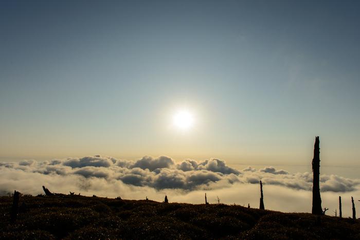 天候に恵まれると、大台ケ原では早朝に雲海を見ることができます。足元よりも低い場所に雲が無限に広がる雲海が現れる様は幻想的で、まるで仙人になったかのような気分を味わうことができます。