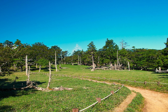 笹原が広がる牛石ケ原は、大台ケ原のハイキングコースの中でも、眺望が開けた起伏の少ない場所です。ここは歩道も広く歩きやすい場所になっているので、ハイキング途中の休憩スポットとしておすすめです。