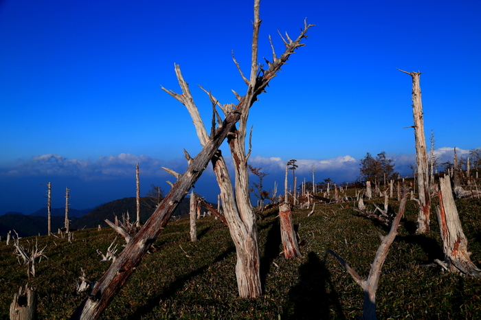 正木峠の地表を覆う、緑の笹以外、ここでは生きている木がありません。長年の間、風雨に晒され、無残に朽ちていった白い立ち枯れの木や倒木が並ぶ正木峠は、まるで森の墓場のような雰囲気を醸し出しています。