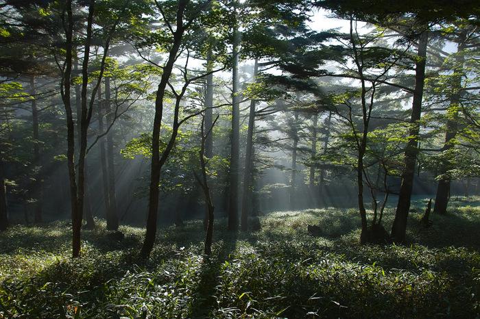 国際連合教育科学文化機関の生物圏保護区(ユネスコエコパーク)に登録されている大台ケ原では、豊かな原生林が生い茂っています。鬱蒼と茂る森の樹々の間から光芒が差し込む様は神秘的で、まるでここが神々の住処であるかのような錯覚さえも感じます。