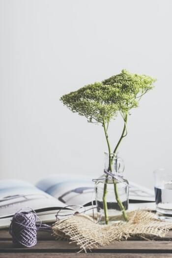 見ているだけでも癒やされる自然の力。緑の植物は読書時間を充実させるのにもってこいのアイテムなんですよ。観葉植物があるとストレスが緩和され、眼精疲労が軽減するといわれています。