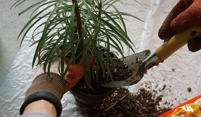 プランターの3分の1まで土を入れた後、真ん中に植物を置いて土をかけます。植物が綺麗に立つよう、バランスを見ながら入れてくださいね。