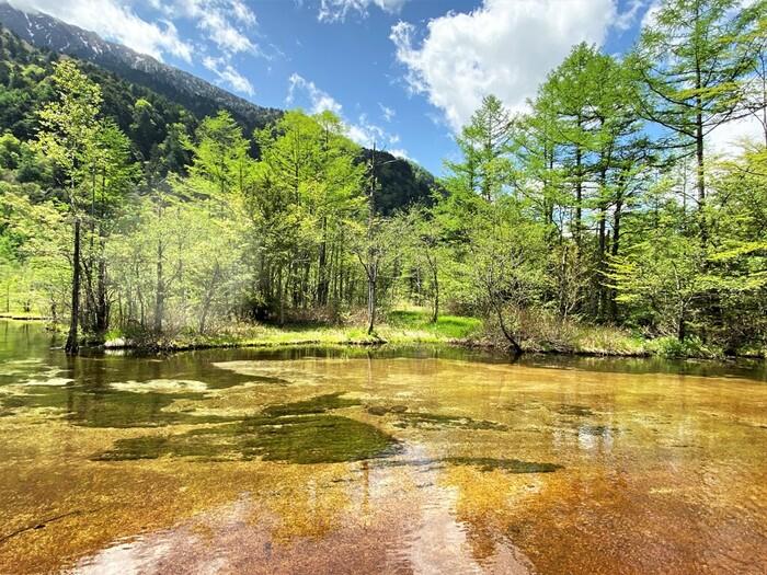 北アルプスの険しい山々、生い茂る深緑の原生林の中にぽっかりと空いた空洞のような田代池は、透明度の高い浅瀬の池です。私たちに馴染み深い水田のように、田代池には、どこか見る者を和ませる不思議な魅力が漂っています。