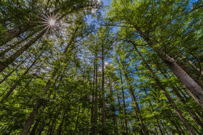 鬱蒼と生い茂る上高地の原生林。天を覆うほど高く伸びた樹々の間から差し込む木漏れ日を浴びる気持ち良さは格別です。