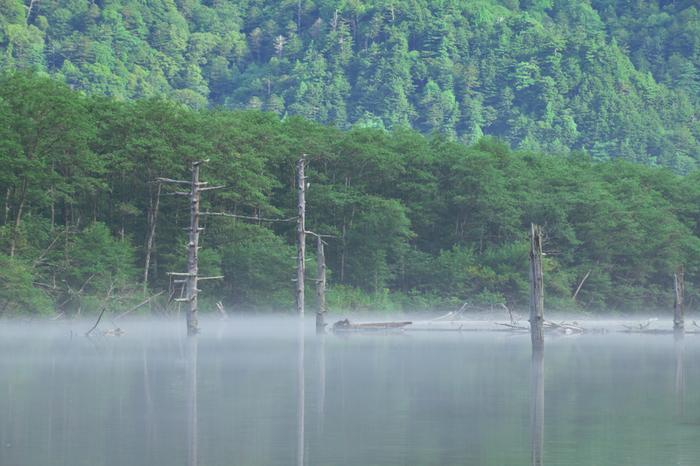 大正池には、立ち枯れとなった白樺の樹々が、水面に浮かぶように並んでいます。まるで木が白骨化したかのような立ち枯れの樹々が、大正池の幽玄閑寂とした雰囲気を引き立ててきます。