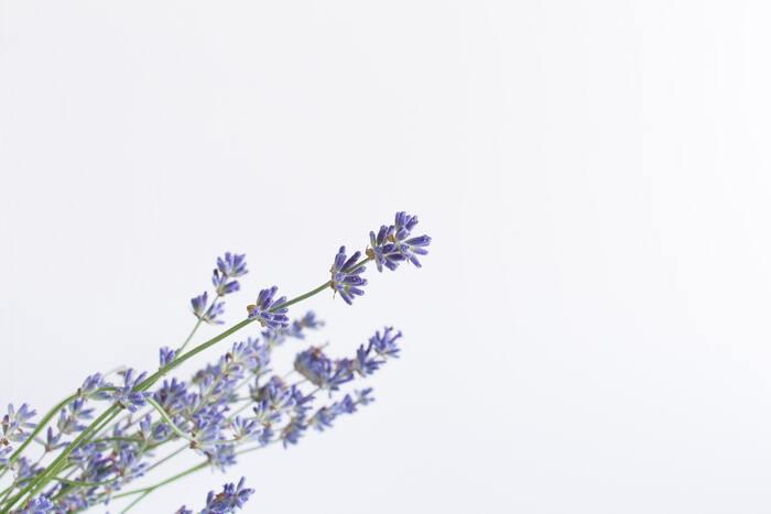安眠を促すラベンダーは、ベルガモットと好相性。やさしいフローラル調の香りに、すっきりしたベルガモットをブレンドさせると、紅茶を連想させる上品な香りに。リラックス効果が高まって、心地よい気分で眠りにつけますよ。