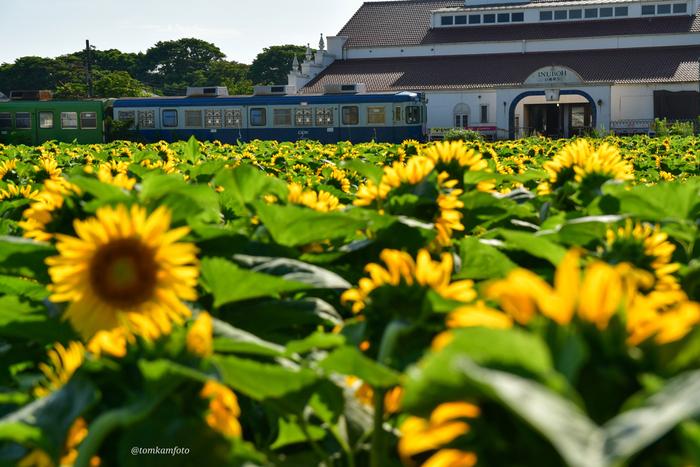 千葉の最東端「銚子」絶景が美しい観光スポット&おすすめ地元ランチ