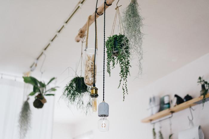 観葉植物を吊るでば、ナチュラルで緑あふれる空間に。複数の植物を自由にセッティングできるので、季節や気分に合わせてさまざまな表情を楽しむことができます。