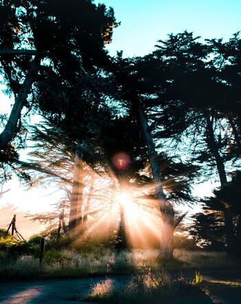 風のそよぎに感覚を研ぎ澄まし、揺れる木々や鳥の声、自然の音に耳を澄まします。歩き方は、ゆっくりと一歩ずつ大地を踏みしめて。そうすることで、自然と心が落ち着いていき、瞑想のような効果を感じらるようになっていくはずです。
