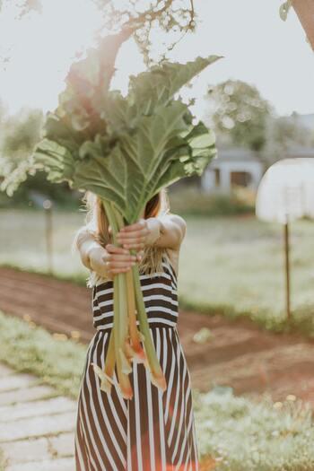 ルバーブは、株を大きくするために出来れば1年、少なくとも半年は収穫をしなければなりません。また、4月頃に出てくる花茎は、根株から栄養を奪ってしまうので摘み取らなければなりません。もしも花から種を取りたい場合には、種を取る様の株を決める様にしましょう。