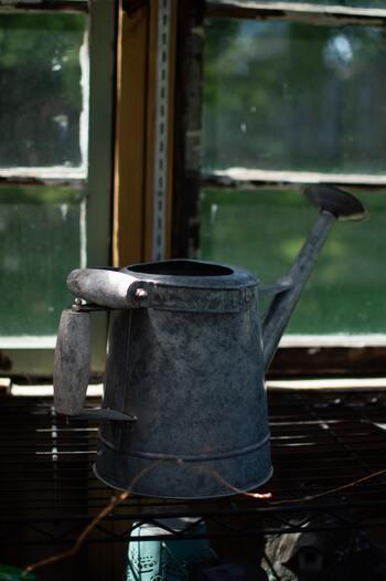 実は根腐れしやすいルバーブ。毎日お水をあげるのではなく、土が乾いたタイミングでたっぷりあげる様にしましょう。雨が続いた時には、水やりをする必要はありません。
