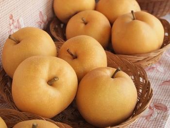 9月下旬から10月中旬に出回ります。酸味が少なく甘い上品な味わい。大ぶりのため贈答用にも使われます。