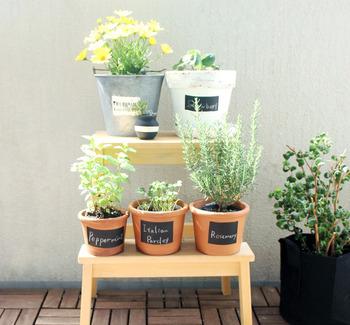 本格的なガーデニングは気おくれしてしまう人も、いくつか鉢植えを育てることなら楽しくできそうですよね。 植物を置くと、見ためが美しくなるだけでなく水をあげたりお手入れしたりするひとときが癒しをもたらします。