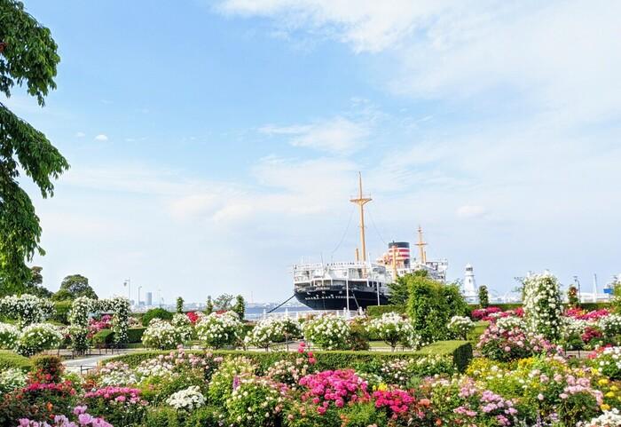 2016年に重要文化財に指定された日本郵船氷川丸があるのも、この場所。船の見学は10時からですが、外観を見るだけでも異国情緒を感じられますね。また、季節ごとに咲き誇る約160種類のバラも美しい色と香りで楽しませてくれます。