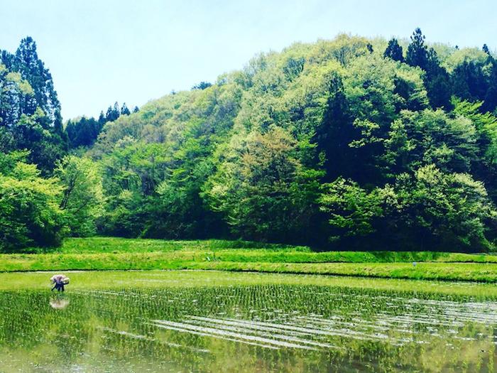 「山燕庵」の本社は埼玉県の川口市にありますが、生産の拠点は石川県羽咋郡志賀町の自然豊かな土地にあり、人と自然が永続的に共存できる、自然循環型の農法により、糀発酵玄米に使用されている山燕庵のブランド玄米などが作られています。