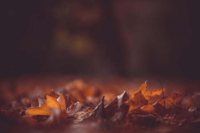 夜の帳が下り、少し涼しい風が肌をなでる秋の入り口は、心地よくも少し人恋しいもの。そんな空気にピッタリなのが「マイ・ブルーベリーナイツ」。  主演がノラ・ジョーンズというだけで、あの歌声が秋の夜長にピッタリなのは、想像がつくはず。