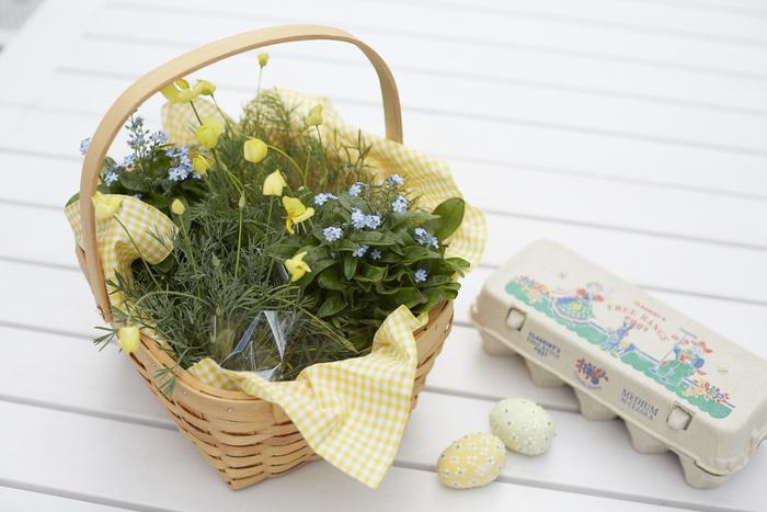 エッグハントでイースターエッグを入れるバスケット。そんなイースターバスケットをイメージしたカゴでお花の苗を育てました。生き生きと育つお花はまさに生命の象徴。イースターのお祝いにぴったりのアレンジです。