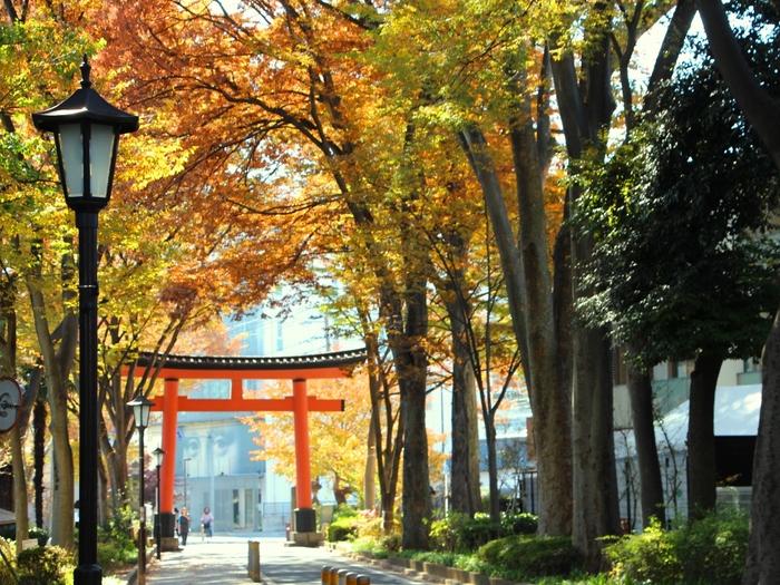 「大宮」の地名の由来でもあり、パワースポットとしても名高い「大宮氷川神社」。  そこに向かってまっすぐ伸びるケヤキ並木からなる参道は、2kmにわたって続き、なんと日本最長。季節の移ろいと共に、初夏には新緑が、そして秋には色づいた葉が頭上を彩ります。