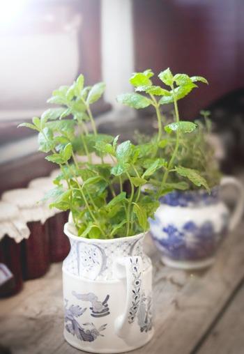 空き缶や空き瓶をフラワーベースや鉢植えに。こちらも簡単に取り組めるアイデアです。使わなくなったティーポットやケトルを鉢植え代わりにするのもおしゃれでおすすめですよ。