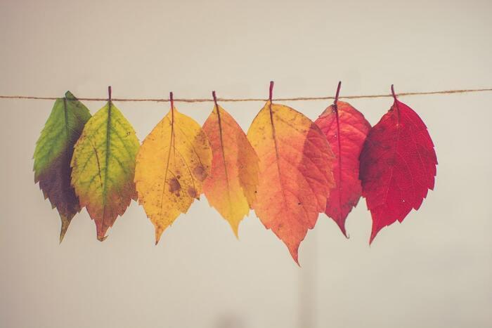 初秋の雰囲気を気軽に楽しむなら、「秋色」にこだわってみましょう。大きな面積で取り入れなくても、クッションカバーやランチョンマットなどの小さなファブリックでプラスすると気軽に楽しめます。  秋色選びは、木々の紅葉をイメージしてみてください。グリーンからイエロー、オレンジやレッドに変わっていく葉の色は、秋インテリアをつくる参考になります。