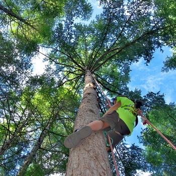 近年注目を集めているのが「ツリーイング」。ロープを使った木登りで、まるで空中を散歩しているかのような感覚に浸れる、アウトドアレジャーです。