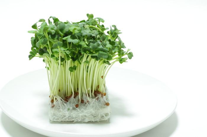 栄養もあってリーズナブルで、家計の味方といえる「かいわれ大根」。美味しく食べられるバリエーションを増やすと、日々の食卓が豊かになりますね。短期間で家庭栽培もできるので、トライしてみると、植物の成長を楽しみつつ、自然の恵みに感謝して食べられますよ。可愛らしい「かいわれ大根」をもっともっと活用してみてくださいね♪