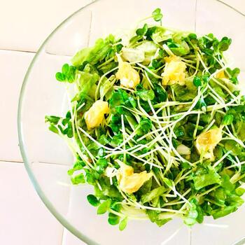 生のかいわれ大根と夏みかん、フリルレタスをマー油で和えた簡単フレッシュサラダです。マー油とは焦がしニンニクをメインにした調味料のこと。  夏みかんのジューシーな食感とぴりりと辛いかいわれ大根がよく合います。