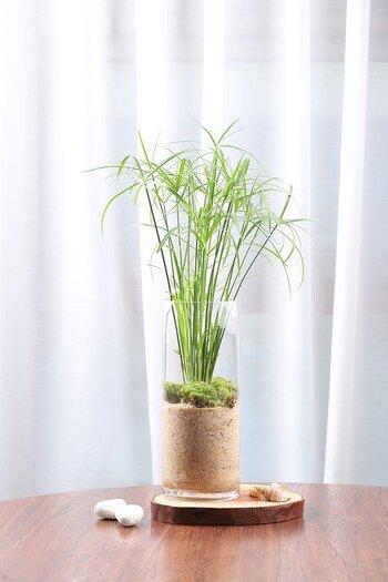 水耕栽培に挑戦したけれど、なかなか育たない、または枯れてしまう時には、まずは紹介した水と光をチェックしましょう。水はこまめに手入れすること、光は日照が不足しないようライトを利用することが大切。種や苗から育たない場合は、種を植えるスポンジが硬すぎる場合がありますよ。
