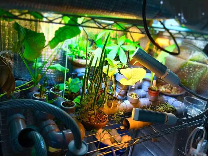 室内での栽培だと不足しがちな光は、LEDライトとカバー。続けて使用するため電気量がかかりにくく、全体にムラなく照射できるアイテムを選びましょう。簡易的に100円ショップのものを購入するのもおすすめ。