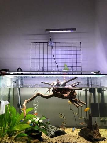 水槽の上で植物を育てる水耕栽培をアクアポニックスといいます。お魚鑑賞をしつつ野菜を育てる面白いアイデア。水槽の水を使って野菜を育てることもでき、それにより水が浄化されるとされていますよ。