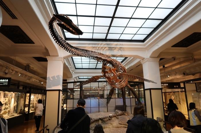 上野恩賜公園内にある「国立科学博物館」は、おひとり様の東京観光にもぴったりの落ち着いた雰囲気が魅力。日本列島の誕生について紹介する「日本館」や、地球の豊かさ・科学技術の発展などを伝える「地球館」など、常設展示だけでもかなりのボリュームがあります。