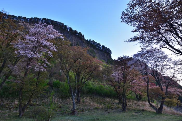 古くから受け継がれている伝承と、雄大な自然が残された日本の原風景が広がる曽爾村は都会の喧騒とは無縁の世界が広がっています。ここでは、穏やかな時間が流れており、どこか懐かしい佇まいが今でも息づいています。