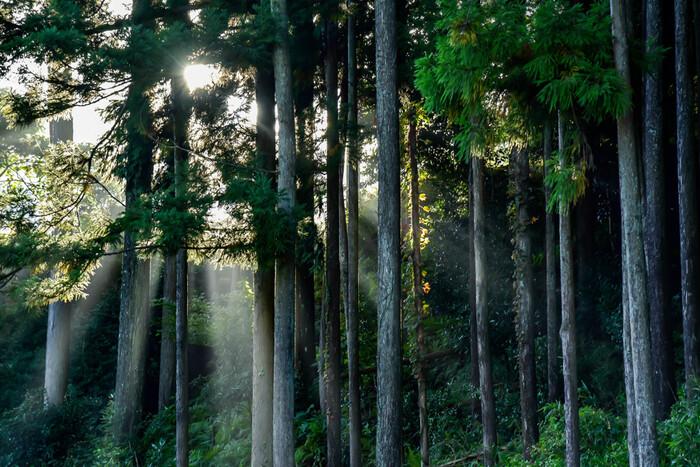 冷涼多雨という恵まれた気候の曽爾村は、夏でも比較的涼しく、近畿地方における避暑地ともなっています。豊かな自然が広がる曽爾村は、初夏から夏にかけて森林浴をするには最適のスポットとなります。