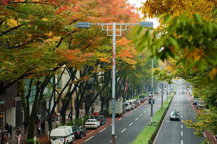 JR原宿駅から東京メトロ表参道駅までは徒歩約10分。通りには美しいケヤキ並木が続き、大型商業施設やおしゃれなショップ、カフェなどが軒を連ねます。また、冬はイルミネーションがきれいな場所としても有名です。