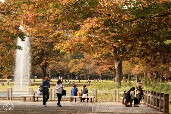 明治神宮のお隣に位置する「代々木公園」も、原宿の憩いスポットとして人気の場所。芝生やベンチでのんびりしたり、レンタサイクルでぐるっと周ったりと、自然の中でホっとひと息つけますよ。また、イベントやフリマが開催されることも多く、人との交流を楽しみたい時にもおすすめです。
