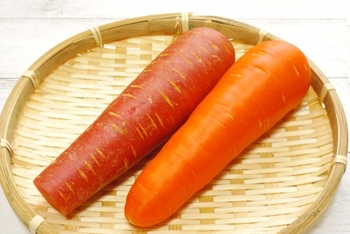 人参は、よく見かけるオレンジ色のニンジン(画像右)のほか、赤い色の「金時人参」という名のニンジン(画像左)もあります。赤の発色がよく鮮やかで、お正月のお雑煮などによく用いられます。  金時人参の赤い色の正体は、トマトでもお馴染み、「リコピン」の色素なんです。リコピンは「活性酸素を減らす働き」がβ-カロテンやビタミンEの何倍もの効果があるそう。  よく流通しているオレンジ色の五寸にんじんも良いですが、金時人参もまた、栄養豊富。スーパーで見かけたら注目したいですね。