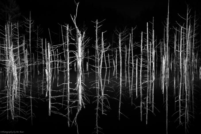 青い池は、季節によっては夜間のライトアップが施されます。漆黒の世闇を背景に、光を浴びて輝く立ち枯れの白い樹々が浮かび上がる様は、まるでモノクロの世界のようです。