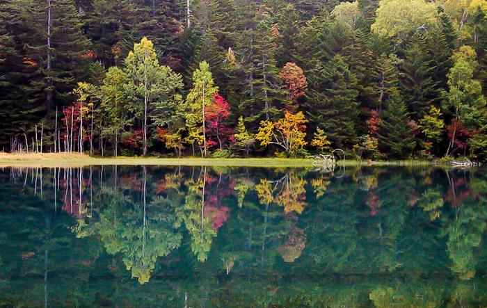 四季折々で美しい景色を見せてくれるオンネトーですが、紅葉シーズンの美しさは格別です。色鮮やかに彩った樹々をオンネトーの波一つない湖面が鏡のように映し出す様は神秘的で、まるでここが神々の棲み処であるかのような気分さえも感じます。