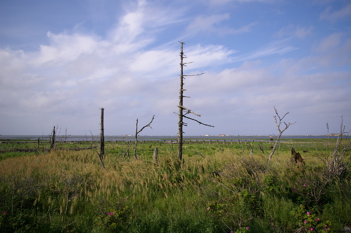野付半島に位置するトドワラは、海水に浸食され、立ち枯れとなったトドマツが無数に点在する独特の景観を持つ観光スポットです。荒涼とした湿原に、無数の立ち枯れの樹が並んでいる様は、幻想的で、私たちが想い描く「地の果て」のイメージにぴったりです。