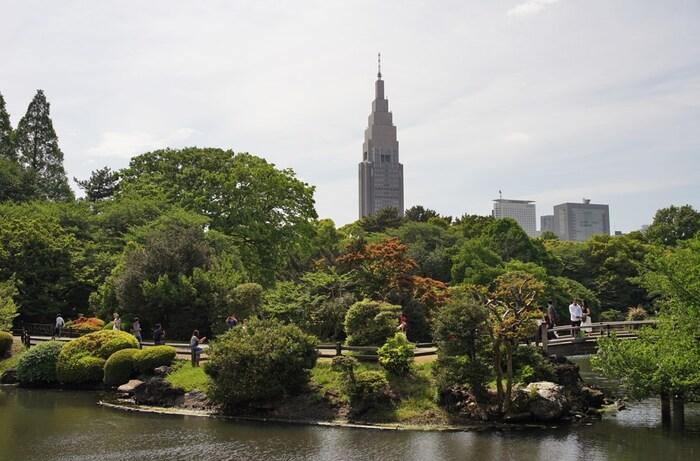 近代的な高層ビルを背景に、緑豊かな美しい庭園が広がる「新宿御苑」。江戸時代に大名屋敷があった場所で、明治には皇室庭園に、戦後からは一般公開されている歴史の長い庭園です。ヨーロッパ式の庭園と日本庭園を組み合わせた作りは珍しく、エリアによって全く違う雰囲気を楽しめます。