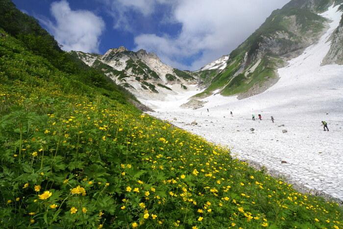 長さ3.5キロメートル、幅100メートルにおよぶ広大な白馬大雪渓は、日本でも最大級の規模を誇る雪渓です。雄々しい岩肌、夏でも解けない白い雪渓、雪渓の周囲に咲く高山植物、抜けるような青空が織りなす景色は、まさに絶景そのものです。