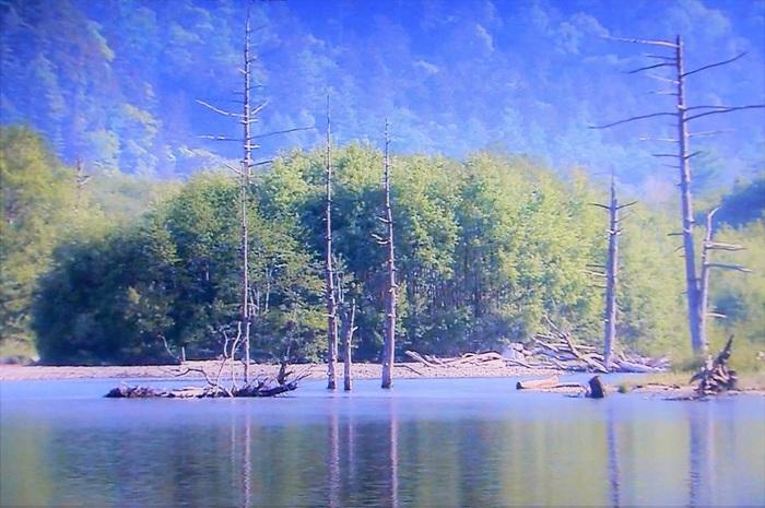 焼岳、穂高連邦などを静かな水面に映し出す大正池には、色彩を失った立ち枯れの樹々が並んでおり、訪れる人々に忘れることができないほどの強烈な印象を与えます。