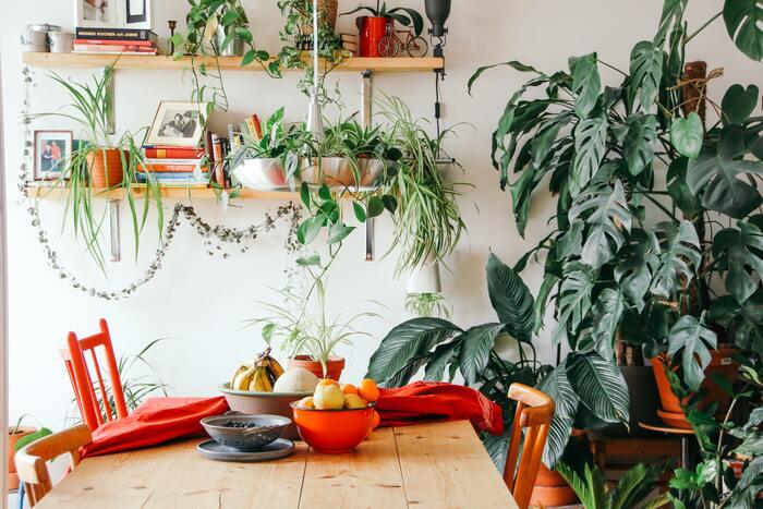 観葉植物やハーブを自宅で育てているという方には、アートもナチュラルなものがおすすめ。木製の額縁を持つ写真や、優しい色合いの絵画、木でできたオブジェなどは、周囲に植物を並べても自然とマッチしてくれます。
